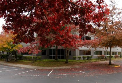 Giant branch of oak tree with red foliage covers parking  lot in office campus in Seattle suburb